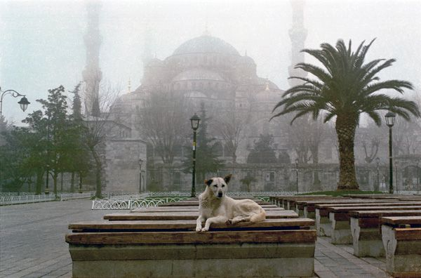 istanbul-kopekleri-g